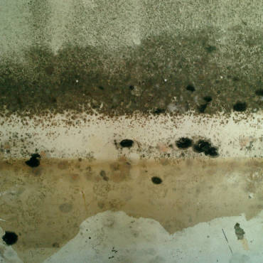 How to Banish Mold from Your Home