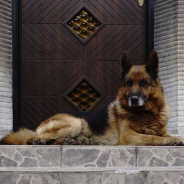 Are there Dog Breed Restrictions on Homeowners Insurance?